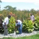 Planted Gravel Filter